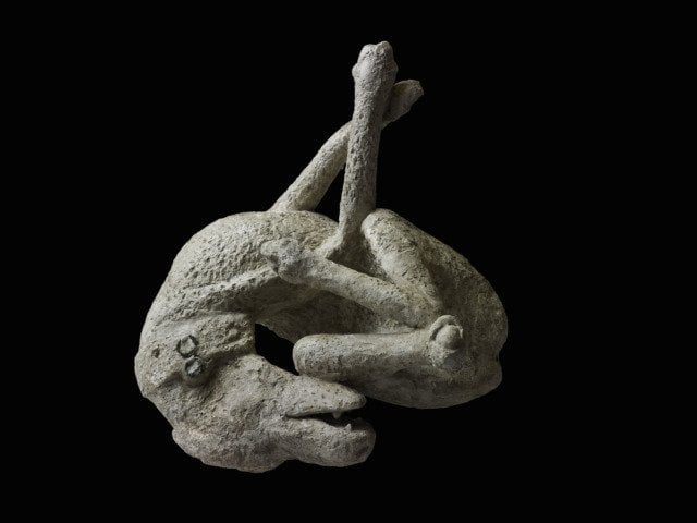 Plaster cast of a dog from Pompeii