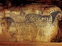 The celebrated spotted horses.