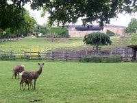 Deer in the park at Le Thot