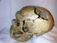 The skull of the 40 year old Neanderthal man.