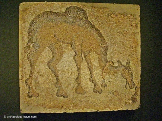 Mosaic fragment of a grazing camel, which has a bell around its neck.