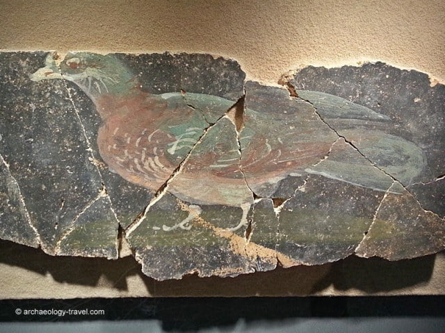 The fragments of wall on which the polychrome pigeon was painted.