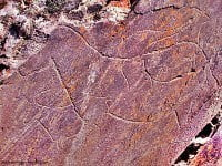 Palaeolithic engravings in the Côa Vally, Portugal.