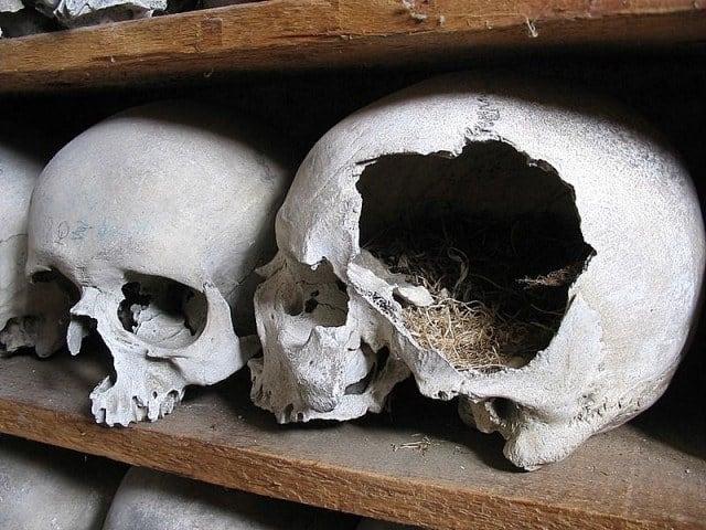 A bird's nest in a broken skull.