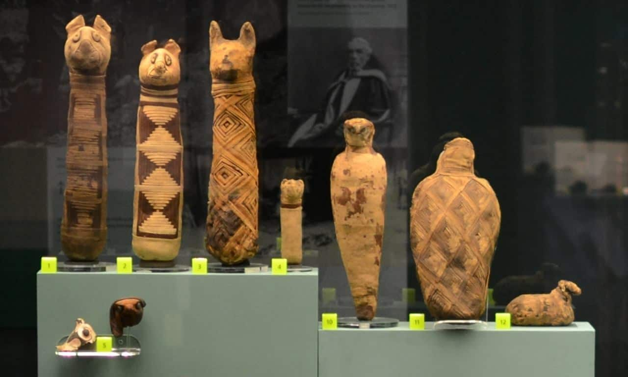 Mummies of animals on display in the temporary exhibition, World Museum in Liverpool.