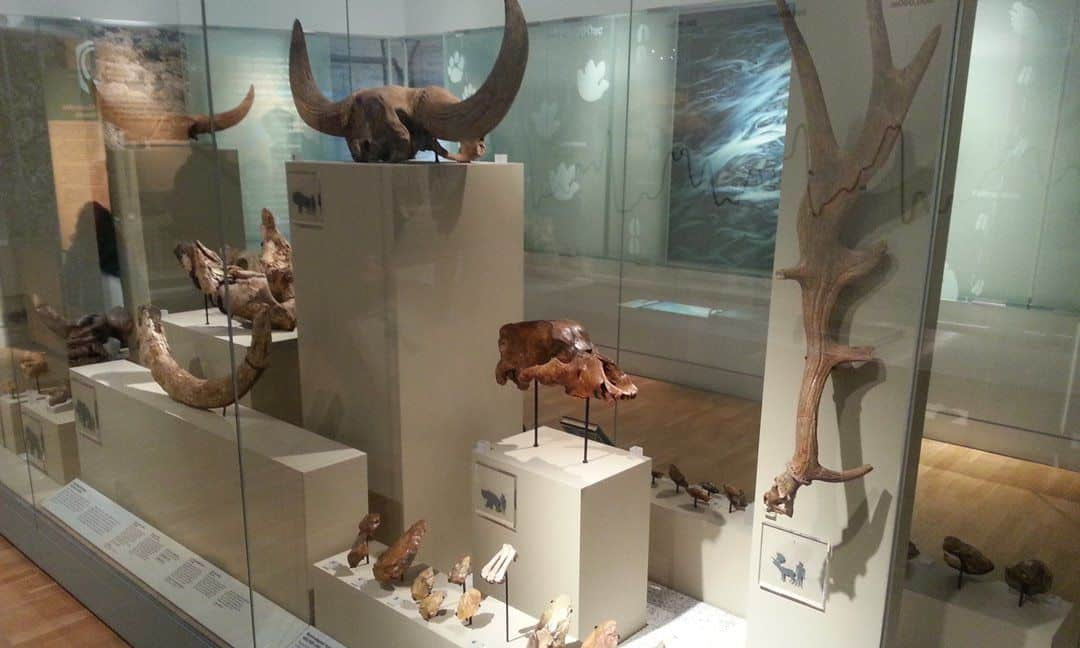 A small part of the extensive series of displays of prehistoric London in the Museum of London.