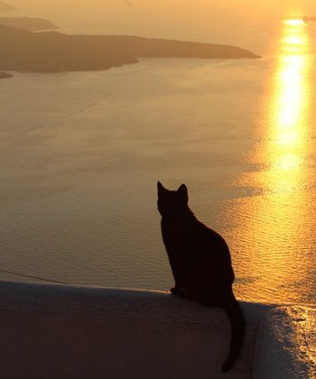 A cat at sunset on the island of Santorini, Greece.