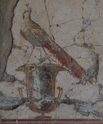 A fresco depicting a peacock at Villa Poppaea, Naples.