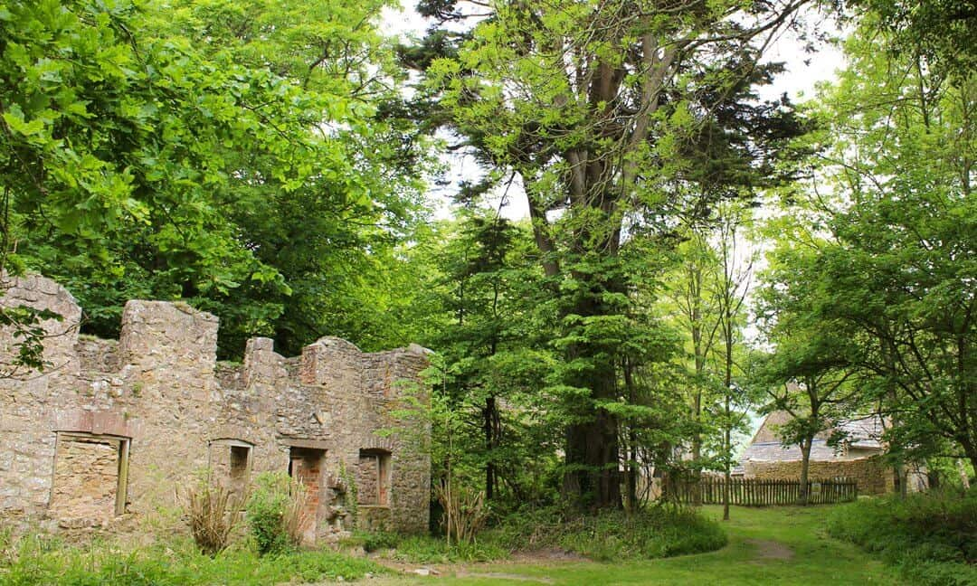 Ruins of Tyneham houses surrounded by trees and vegetation.