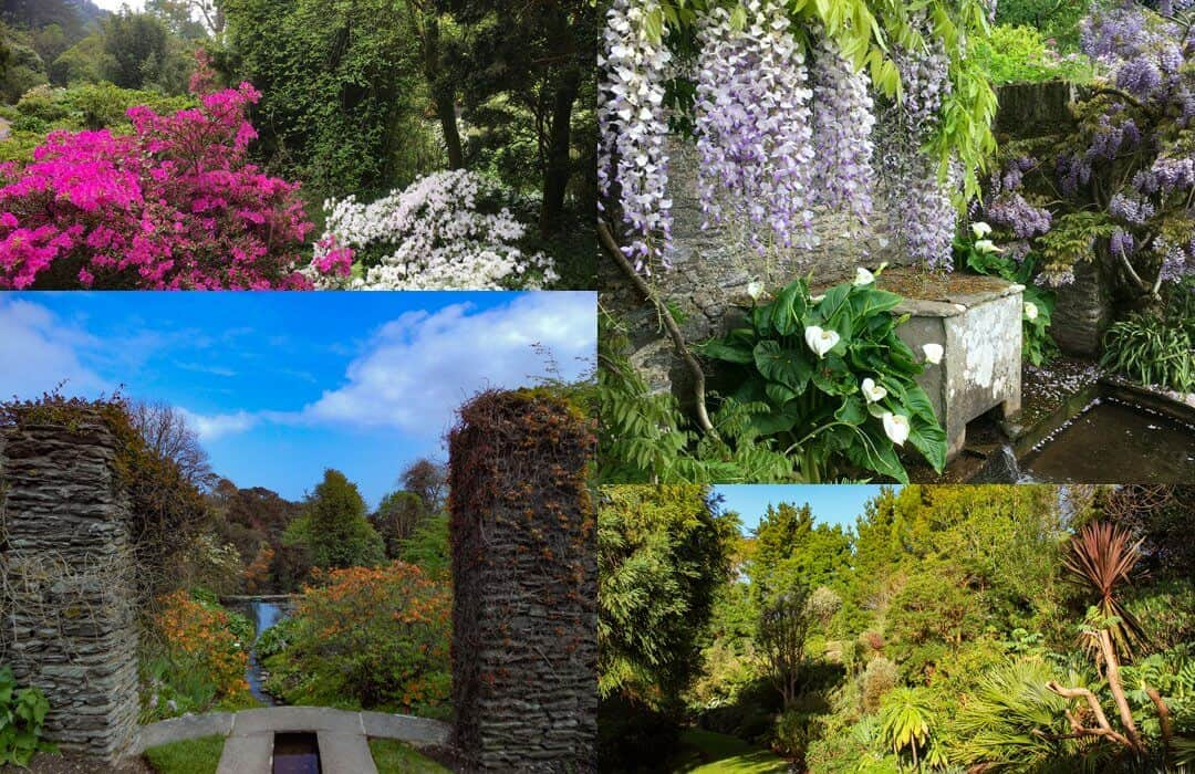 The gardens at Coleton Fishacre through the seasons.