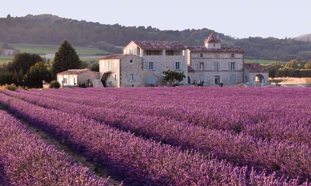 Archaeology Travel | Best Places to See Lavender Fields in Provence for History Buffs | 3