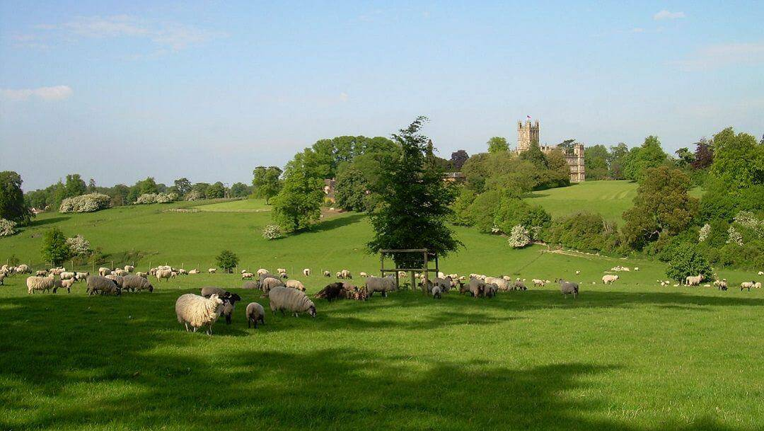 The castle in the background with lots of sheep and green fields in front.