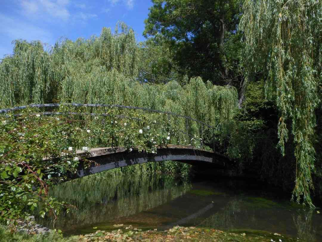 A bridge over a small river covered in white roses.
