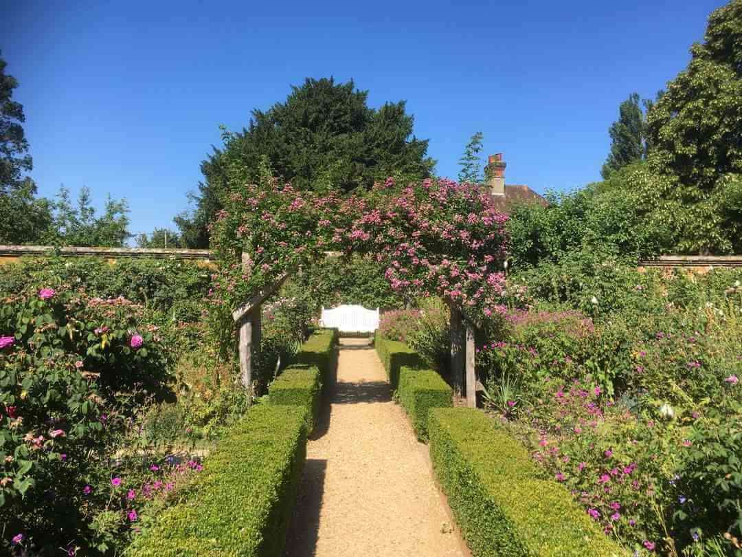 A view down a path with hedges and roses on either side with a blue sky in the background.