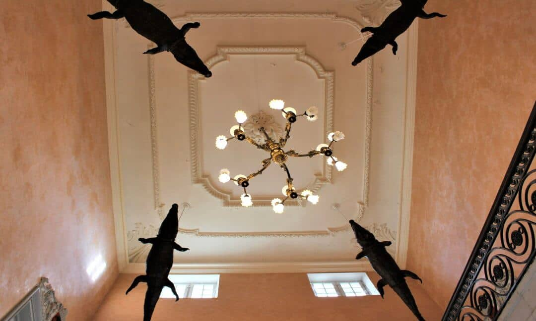 Four stuffed crocodiles hanging from a ceiling.