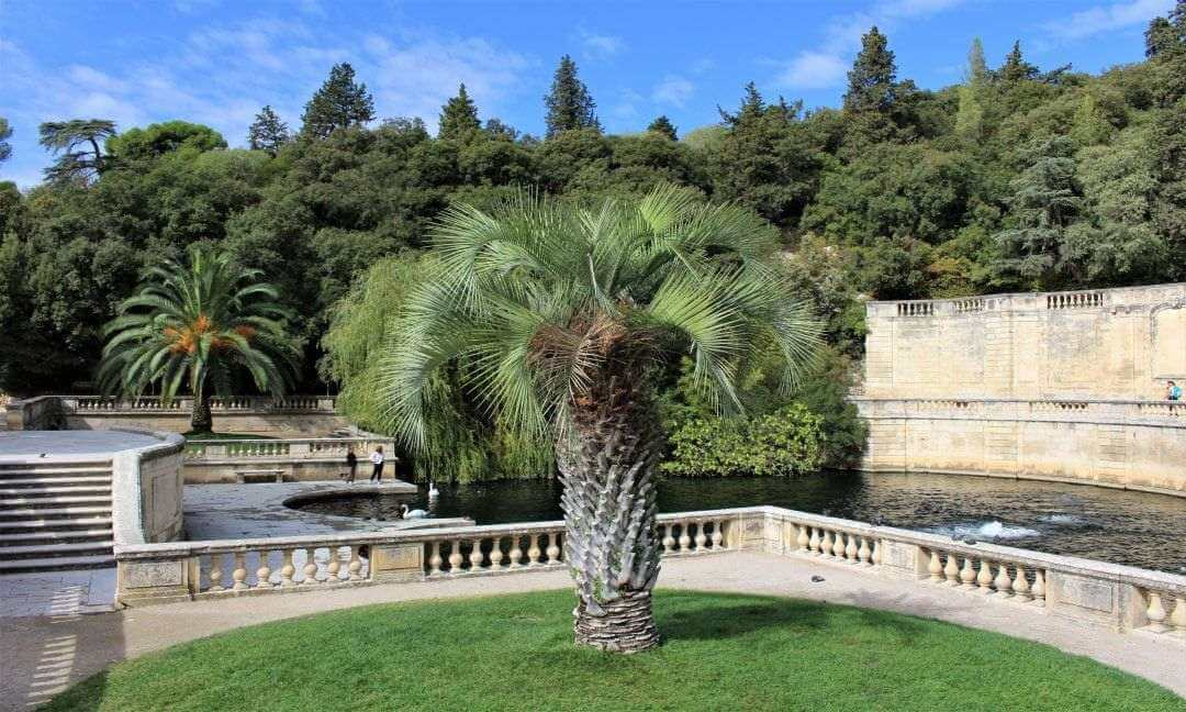 A palm tree in front of a large pond and steps in the Jardins de la Fontaine in Nimes.
