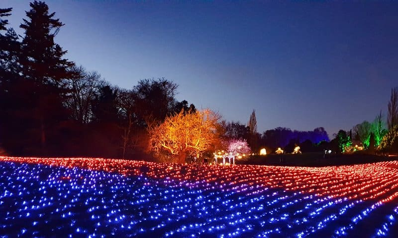 A field of lights at the Christmas light show, Berlin Botanical Gardens.
