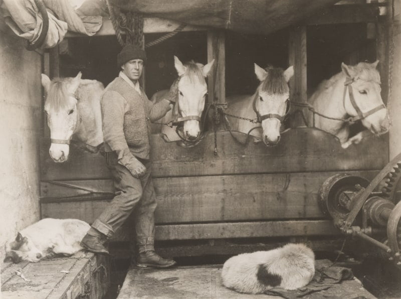 A black and white photo of Lawrence oates with the ponies on the polar expedition.