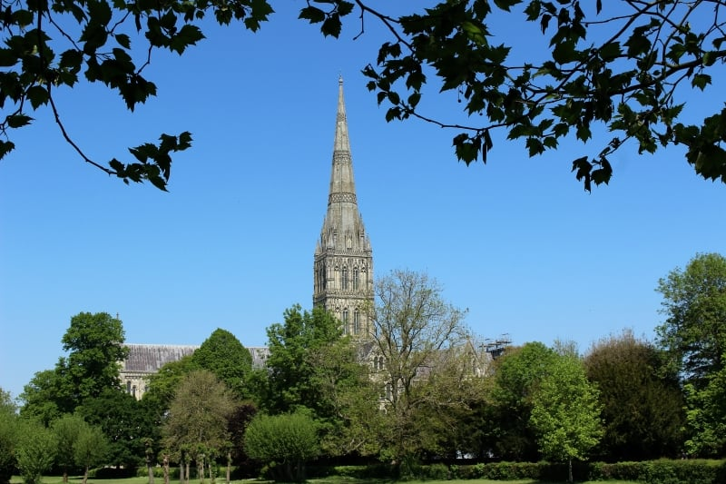 Salisbury Cathedral behind a row of trees.