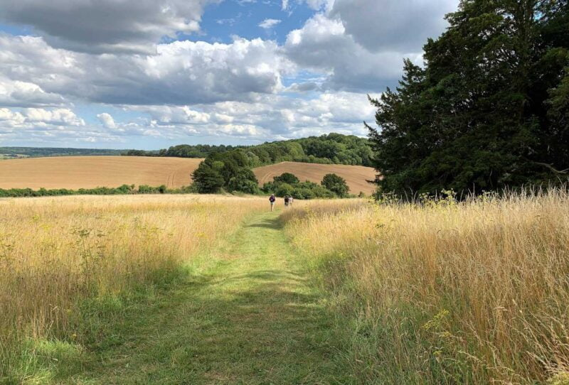 A picture of the  path leading through fields surrounded by high grasses.