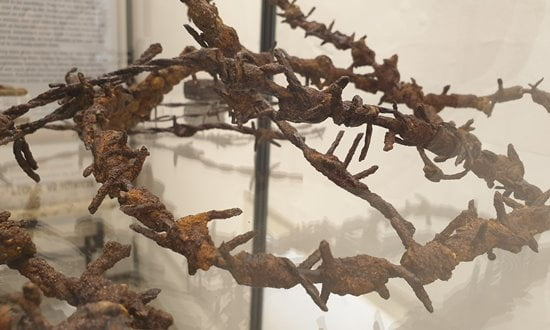 Barbed wire fencing excavated at a Nazi Internment Camps.
