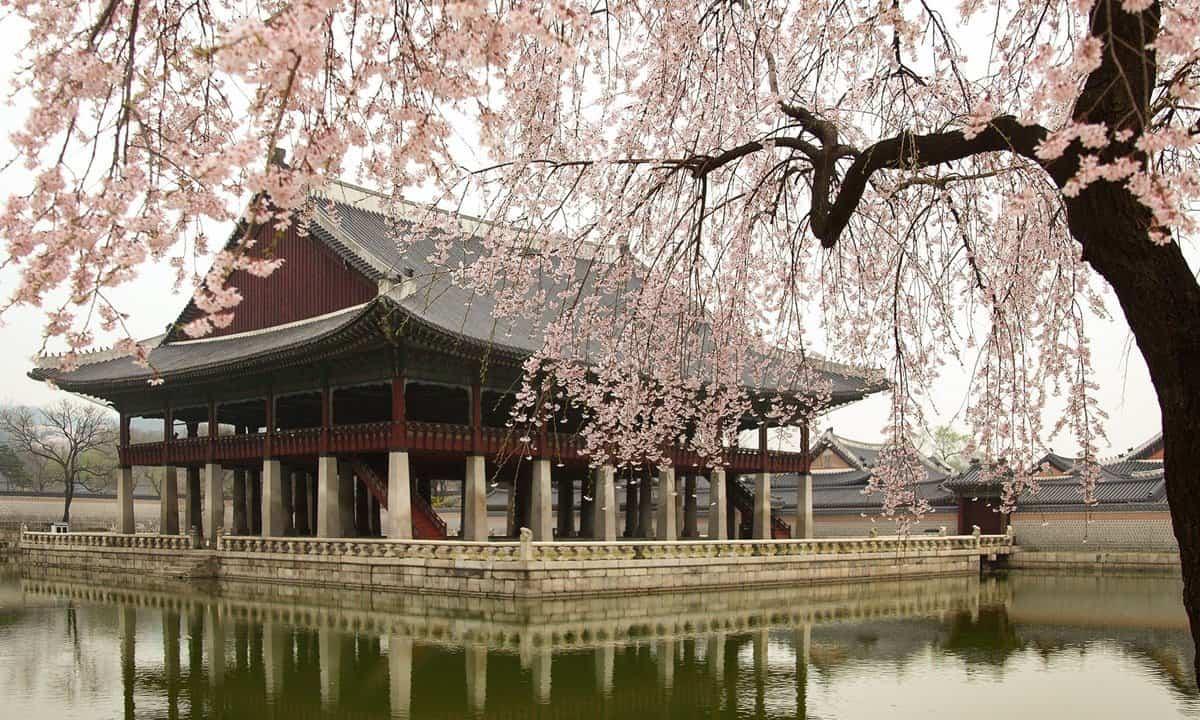 The Royal Banquet Hall and cherry blossom at Gyeongbokgung Palace.